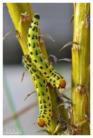 Green Caterpillars by Eccoton
