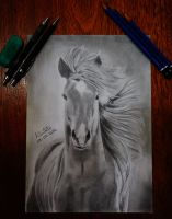 Horse by AntonioNT