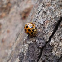 Ladybird by wannabesedated20