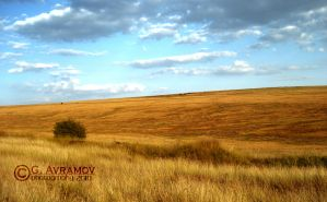 The Golden Meadow by G-Avramov