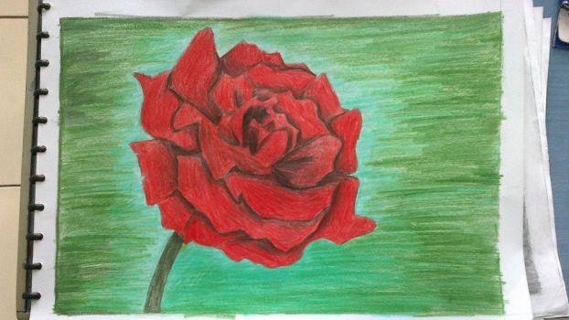 Red rose by Areia13