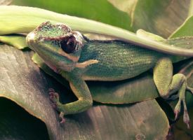 Reptile on leaves by go4music