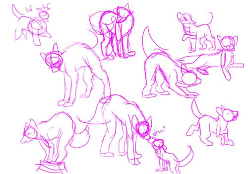 Canine Poses by CandyCaane