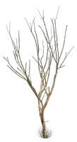Dead Tree PNG.. by WelshDragonStockNArt