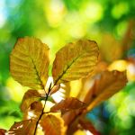 Colored leaves by BlueColoursOfNature