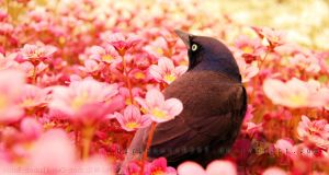 Blackbird by DarkHeart9595