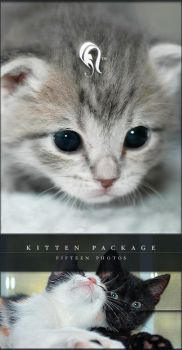 Package - Kitten - 1 by resurgere