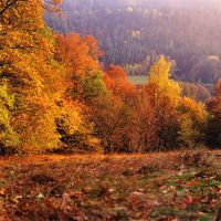 last autumn days by mescamesh