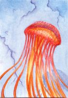 Red Jellyfish by Mulysa