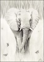Elephant and Butterflies by wildpaintings