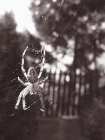 spider by miracoloso