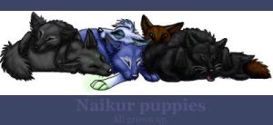 Naikur puppies by Nazcon