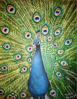 Pavo Real by PedroAntonioArt