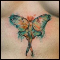 Watercolor Moth by JakubNadrowski