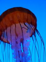 Jelly Fish 09 by LinzStock