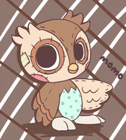 Little owl by Ipun