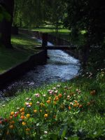 tulip park stock by emmy-stock