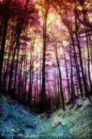 A fairytale forest by mylostway