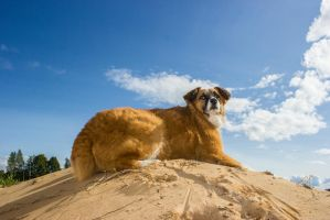 Dog On  A Sandhill by purstotahti