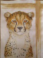 Cheetah portrait by Kaimona