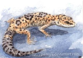 Leopard Gecko ACEO by Pannya