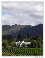 The Winelands of Western Cape by anna-earwen