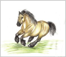 Belgian Horse by Lcutter
