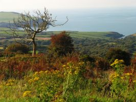 Exmoor Coast by parallel-pam