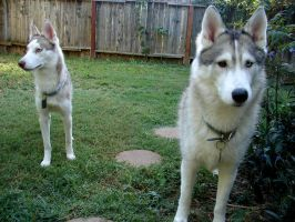 Nova and Taylo - September 2011 by DemberPhotos