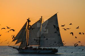The Birds and the Sail by jplaut92