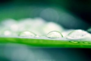 Water drops by Koljan