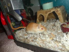 Fabio the Gerbil 2 by LOST09