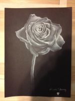 White on Black Rose by KYoung720