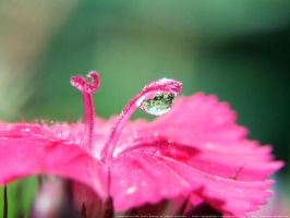 Flower Droplet by onixaStock