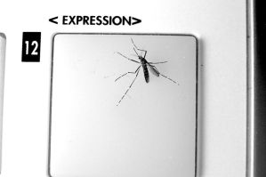 mosquito on pad key by romique