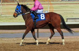 Racehorse Stock 13 by Rejects-Stock