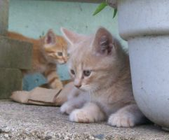 Kittenses 03 by Empy-Stock