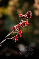 Bright Red by Sophie-Wieland