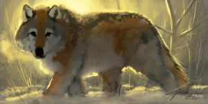 WinterWolf Rough by LoganEDavis