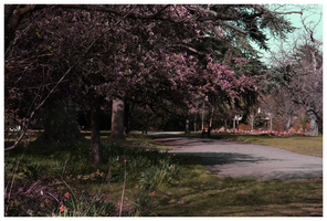Park in Spring by DR1983