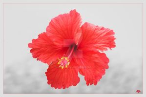 Flower Mb340 by alfa