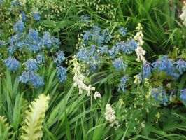 Blue flowers in the green by irkdevine
