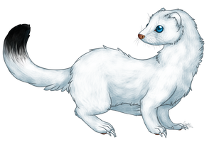 Selena - Ermine Form by Cryptic-Alchemist