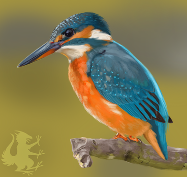 Common Kingfisher Study by Sketchmatters