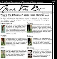 Above The Bit: Horse Markings part:2 by Decorum100