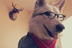 Hipster Dog by JaimePosadas