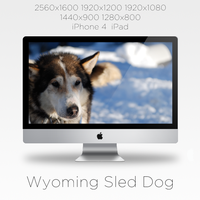 Wyoming Sled Dog Wallpaper by travisfish