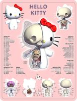 Kitty Anatomy by freeny