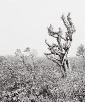 Snowstorm in the high desert 1 by CheshirePhotographer