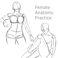 Female Anatomy Practice 1 by RuuRuu-Chan